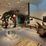 A large skeleton of a dinosaur stands on a table in the middle of a room at a museum.