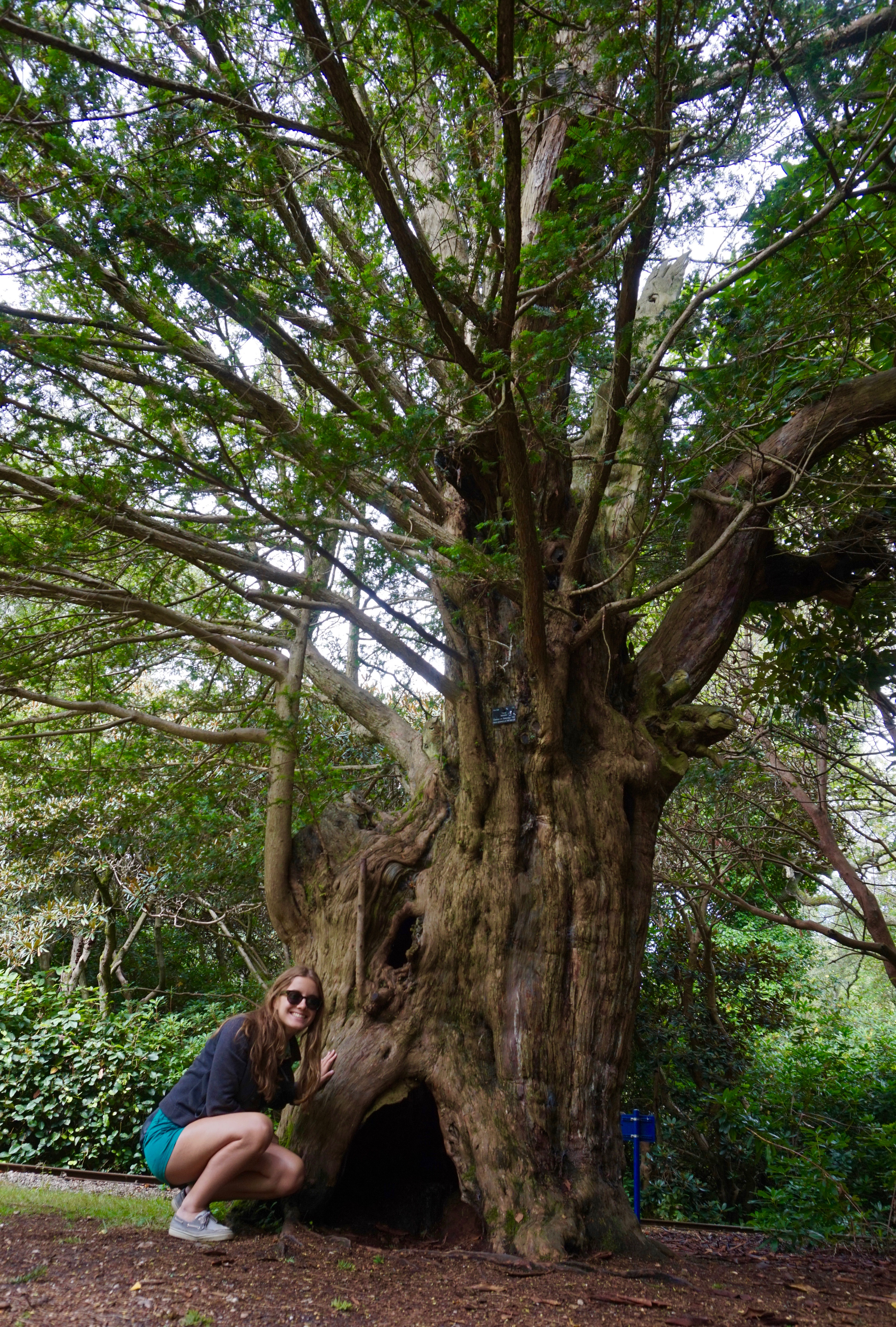 A girl crouches beside a tall yew tree in the woods.