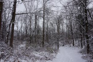 Trees are covered in snow along a hiking trail.