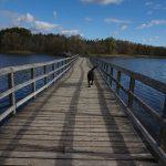 A long boardwalk over a lake in Canada